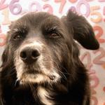 Миф о семи собачьих годах