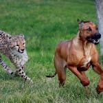 Дружба у животных: могут ли разные виды найти общий язык?