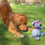 Исследования показали, что собаки предпочитают новые игрушки, но вы можете сделать старые игрушки новыми