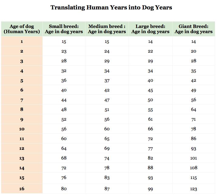 соотношение возраста собак и людей