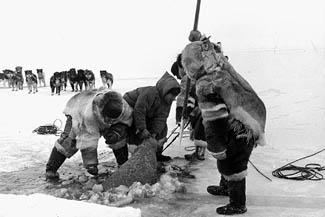 Охотники-инуиты с ездовыми собаками