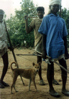 Индог - примитивная аборигенная собака Индии.