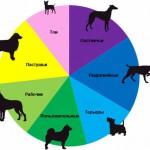 Как победить наследственные заболевания у породистых собак?
