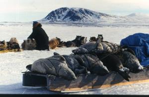 охотник на тюленей