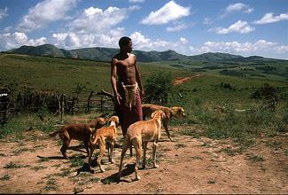 Охотник с собаками в Свазиленде