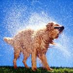 Чем пахнет собака?