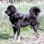 Эволюционные изменения домашних собак