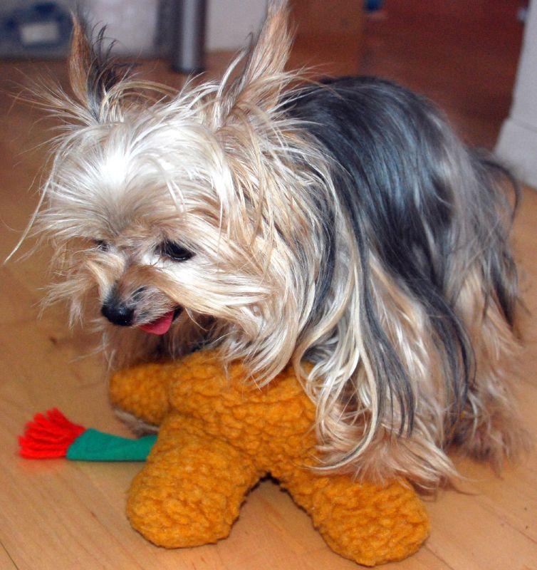 собака садка на игрушку