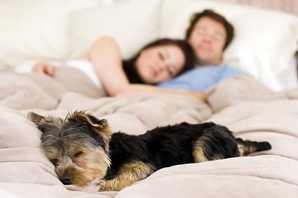 собака спит с владельцем