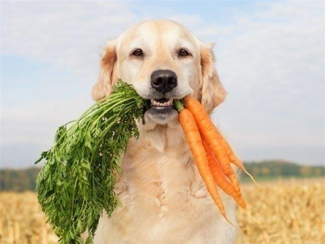 собака и овощи