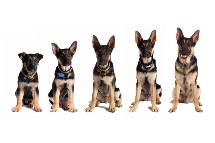 собаки разного возраста