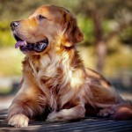 Питание собак и онкология: можем ли мы профилактировать рак?