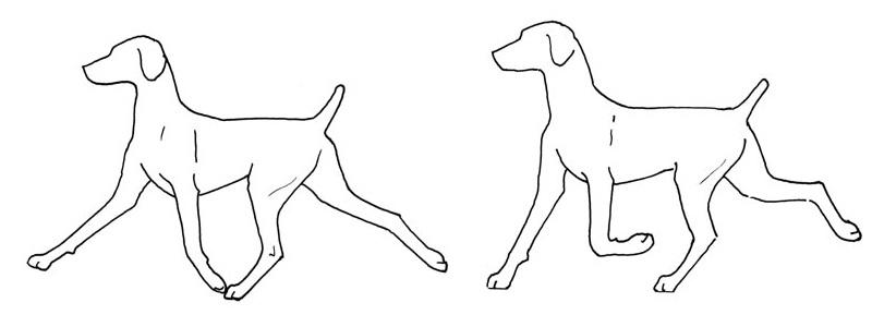 неправильные движения собак