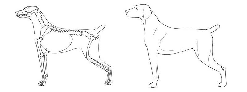 неправильные движения собаки