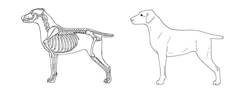 правильные движения собак