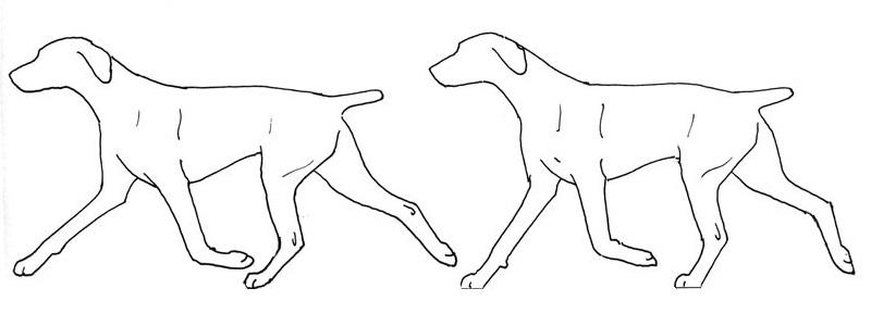 правильные движения собаки