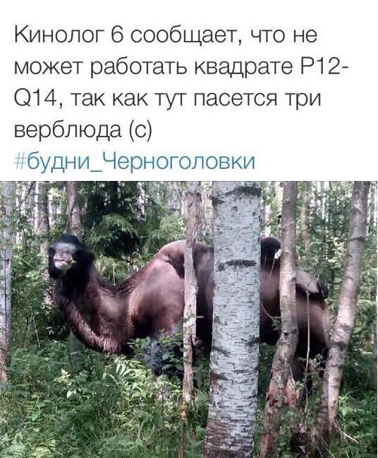 Фото: Олег Самойлов