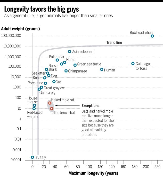продолжительность жизни животных