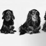 Могут ли собаки жить дольше?