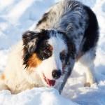 Что мы знаем о собачьих играх?