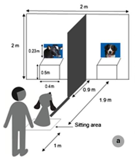 экспериментальная установка с собаками