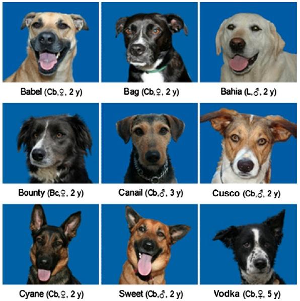 испытуемые собаки