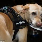 Собаки + технологии