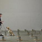 Взаимодействие человек-животное: влияние стресса хендлера на успешность выполнения собакой задачи по поиску взрывчатых веществ