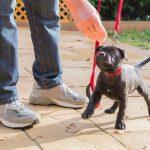 Сколько тренировок для вашей собаки слишком много?