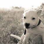 Генетика или среда: как они влияют на поведение собак, и что мы можем сделать?
