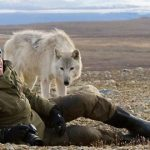 Проблема использования современных волков в исследованиях по одомашниванию собак