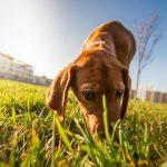 Узнают ли собаки самих себя?