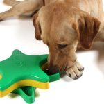 Как обогащение среды улучшает здоровье и благополучие домашних собак