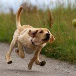 Чем опасна беготня за мячиком?