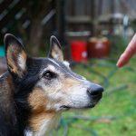 """Что на самом деле значит """"Нет!"""" для вашей собаки?"""