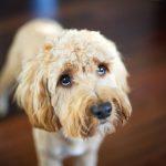 Тон вашего голоса влияет не только на вашу собаку, но и на ваше настроение