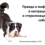 """Презентация """"Правда и мифы о кастрации и стерилизации собак"""""""